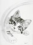 猫鉛筆画アリス