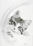 猫鉛筆画1